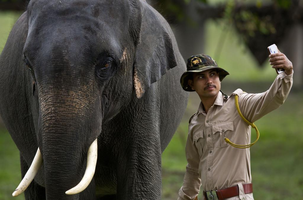 世界で相次ぐ「自撮り死」 ゾウに絞め殺されるケースも